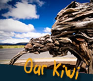 Kiwi Driftwood Sculpture - Forgotten World Project